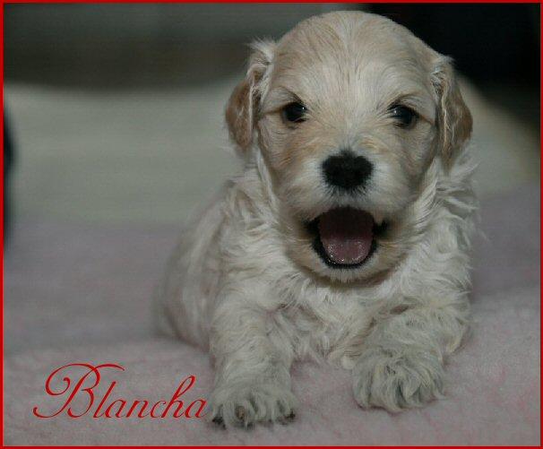 Blancha 1