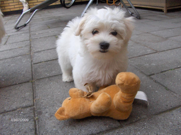 Skal vi lege med bamse??