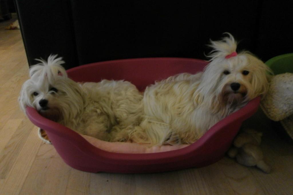 Tessa og Coco hygger