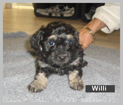 willi