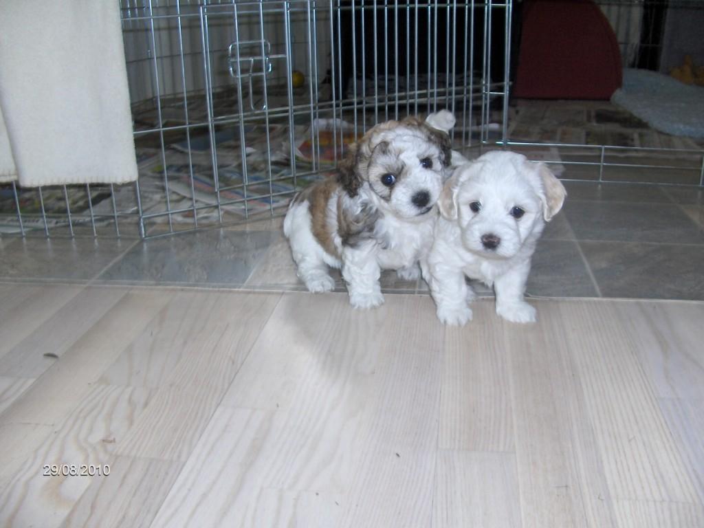 Denice og Daisy