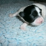 Isolde 1 uge gammel