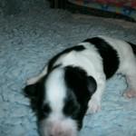 Inca 1 uge gammel
