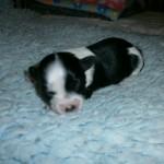 Isabel 1 uge gammel