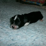 Ida 1 uge gammel