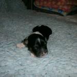 Ina 1 uge gammel