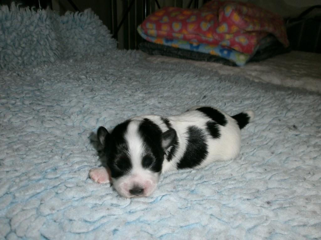 Isac 1 uge gammel
