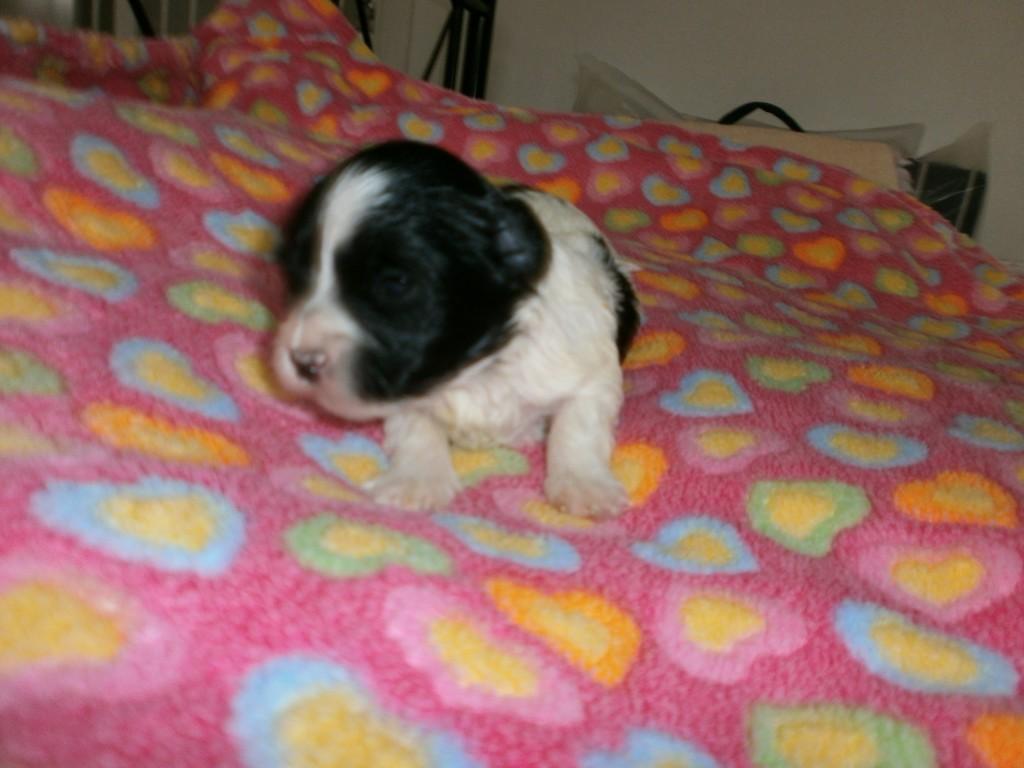 Isolde to uger gammel