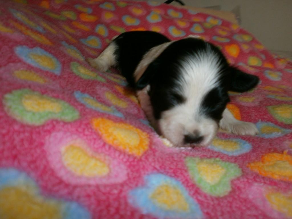 Isabel to uger gammel