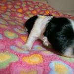 Ida to uger gammel