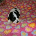 Isac to uger gammel