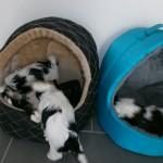 Leg i kattehulerne