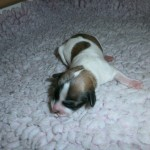 Jasmin 1 dag gammel