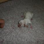 Jenka 1 dag gammel
