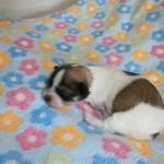 Jasmin 1 uge gammel