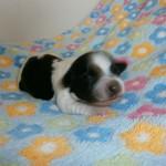 Jack 1 uge gammel