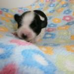 Jessie 1 uge gammel