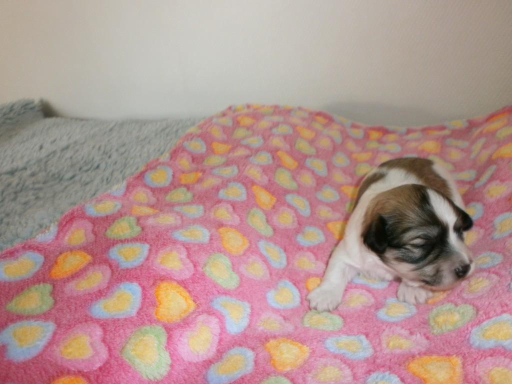 Jasmin 2 uger gammel