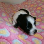 Jack 2 uger gammel