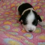 Jessie 2 uger gammel
