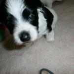 Jack 3 uger gammel