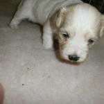 Jenka 3 uger gammel