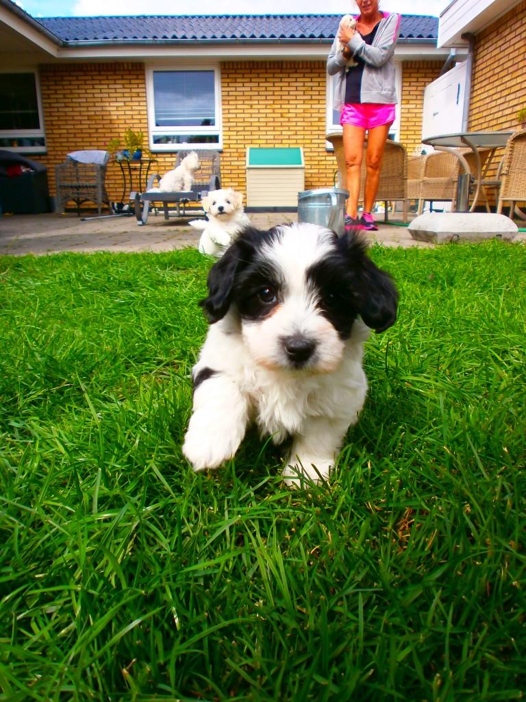 Jessie 7 uger