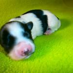 Kiki 1 uge gammel