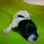 Kia 1 uge gammel