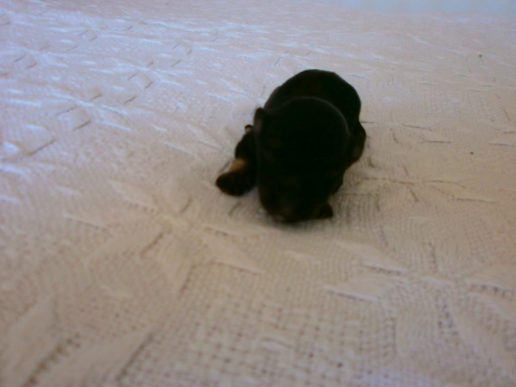 Ludvig 1 uge gammel