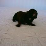 Laurits 1 uge gammel