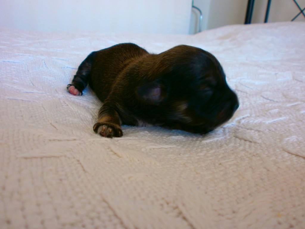 Leon 1 uge gammel