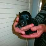 Ludvig 2 uger gammel