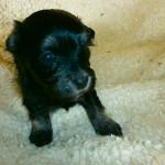 Ludvig 3 uger gammel