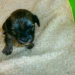 Leon 3 uger gammel