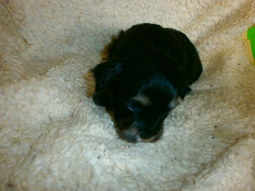 Lara 3 uger gammel