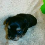 Luna 3 uger gammel