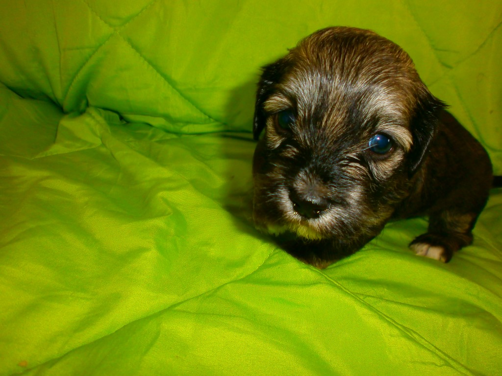 Leon 4 uger gammel