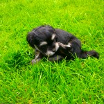 Luna 6 uger gammel