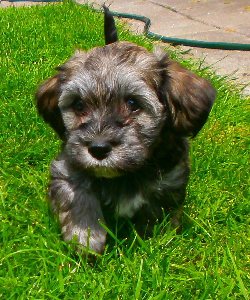 Leon 7 uger gammel