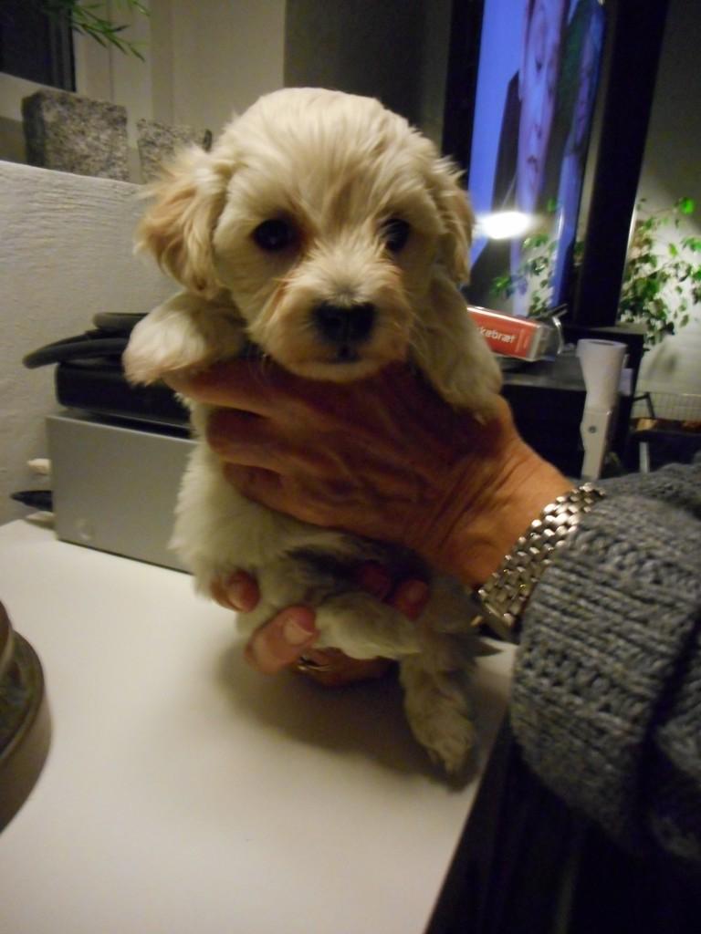 Magnus 5 uger gammel