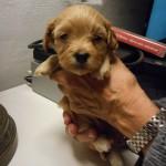 Nico 4 uger gammel