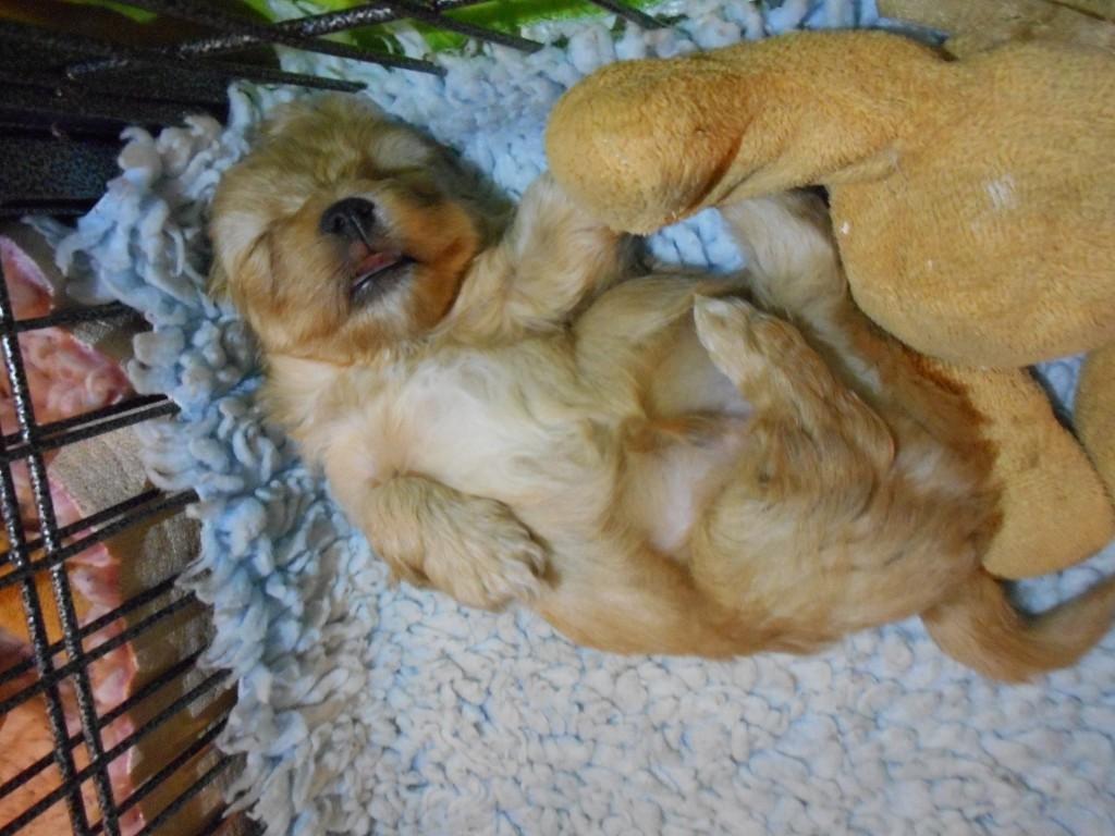 Nico 5 uger gammel