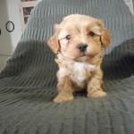 Nico 6 uger gammel