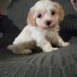 Nora 6 uger gammel