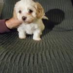Nini 6 uger gammel