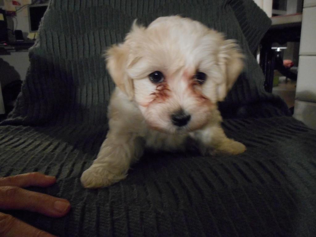 Magnus 7 uger gammel