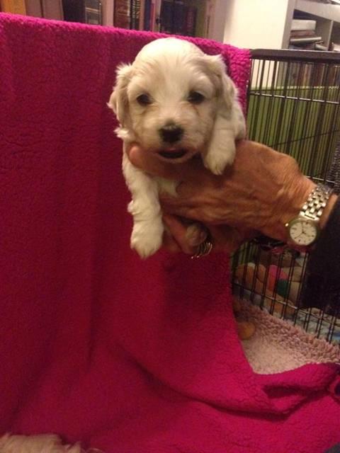 Magnus 4 uger gammel