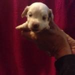 Nora 3 uger gammel