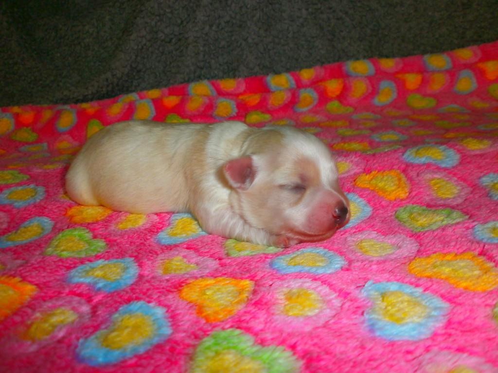 Magnus 1 uge gammel